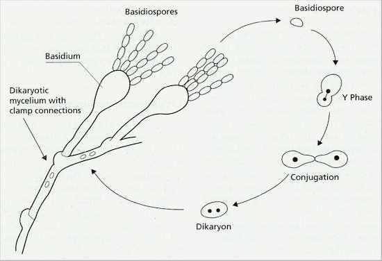 types of soil worksheet