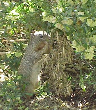Squirrel dating site
