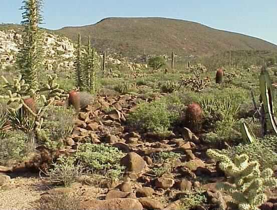 fauna y flora del desierto yahoo dating