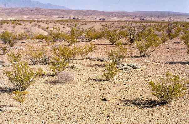 What do these deserts look like Desert Biome Plants