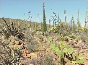 Baja California Desert BAJA DESERT