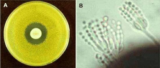 Penicillin and other antibiotics